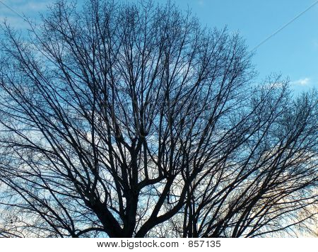 Branches of trees against clear, blue sky