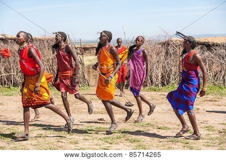 MASAI MARA,KENYA, AFRICA- FEB 12 Masai warriors dancing traditional jumps as cultural ceremony,revie