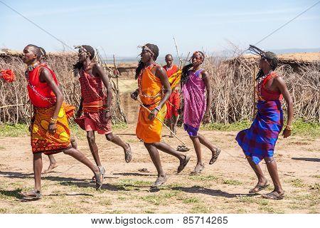 MASAI MARA,KENYA, AFRICA- FEB 12 Masai warriors dancing traditional jumps as cultural ceremony,revie