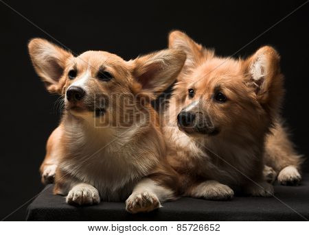 Two puppies.