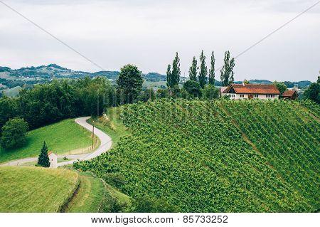 Vineyard in Southern Styria