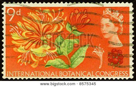 Vintage Postage Stamp. International Botanikal Congress.