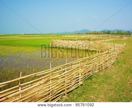 Beautiful Vietnamese rural green paddy field with bamboo fence under sky Vietnam countryside is place for ecotourism with fresh air beauty scene nice agriculture farm poster