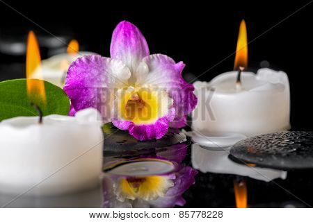 Spa Still Life Of Purple Orchid Dendrobium, Green Leaf With Dew And Candles On Black Zen Stones In R