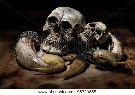 close up human skull still life background