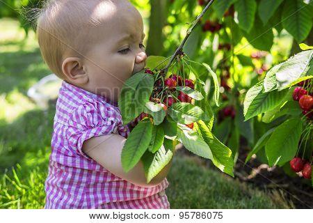 Cute Baby Eating Cherries