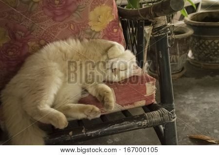 Lazy cute cat squirming on comfy chair