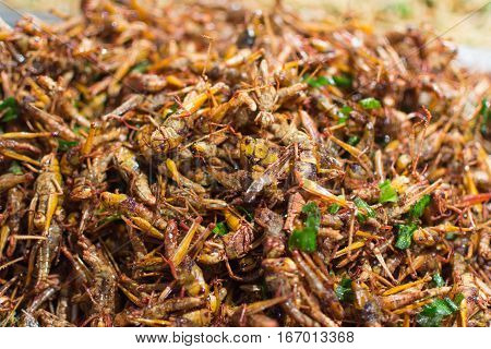 Fried Insects Various Types