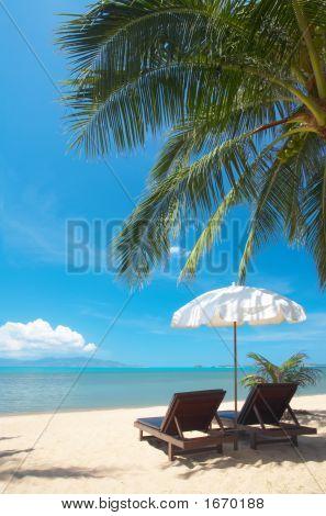Tropic Chairs