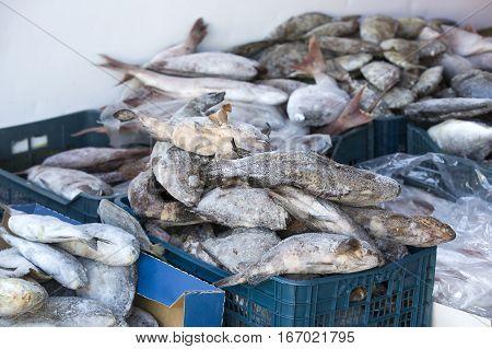 Frozen sea fish mackerel on market perch