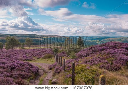 Rolling heather covered hills in Derbyshire Peak District National Park