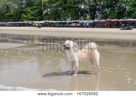 Dog So Cute Beige Color Travel At Beach