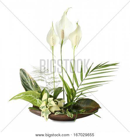 Flower arrangement on a white background