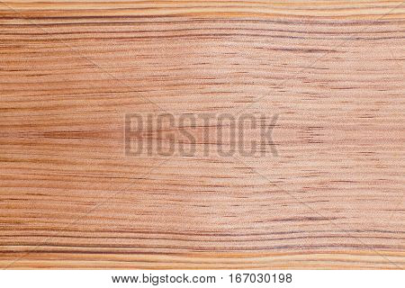 top view of Softwood brown conifers texture with nature background