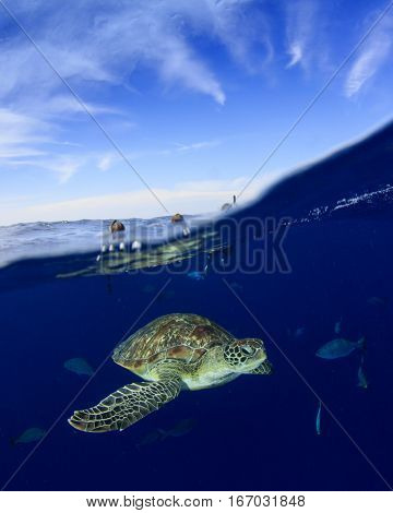Snorkeling with sea turtle. Half and half over under ocean and sky