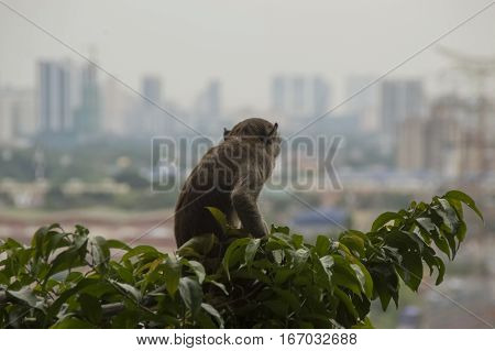 Lonely monkey on tree glancing at modern big city