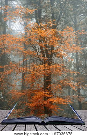 Beautiful Surreal Alternate Color Fantasy Autumn Fall Forest Landscape Conceptual Image Coming Out O