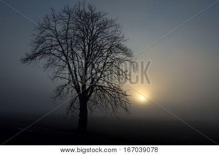 black silhouette of tree in foggy sunrise