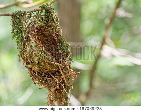 A hummingbird nest hanging from a branch.