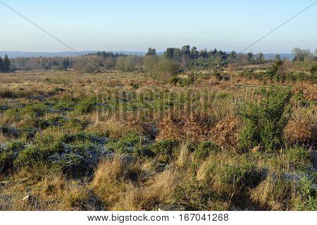 Crabtree Hill Restored Heathland in Winter Sunshine Forest of Dean Gloucestershire