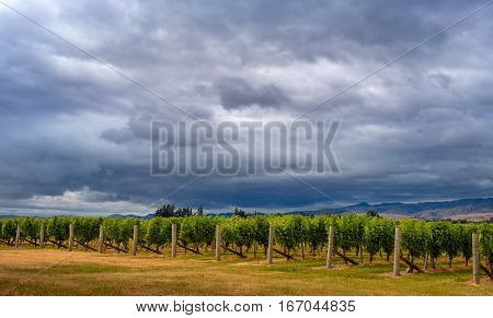 Scenic View Of Vineyards With Dramatic Sky, Marlborough, Nz