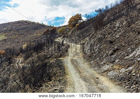 Burned forest in the mountains with charred trees