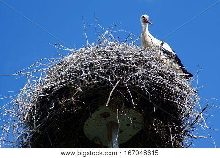 Stork Guards His Nest In Belorussian Village