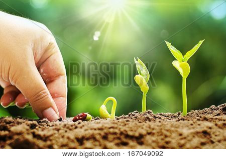 Plant Seed Seedling and Agriculture conceptMale hand sowing seed with sequence of seed germination to sprout growing over sunlight