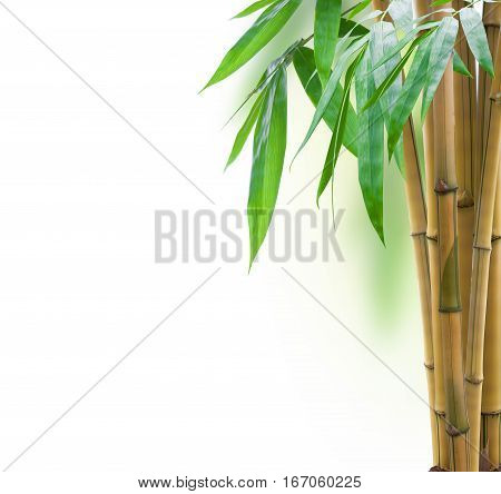 Yellow Bamboo With Leaves On White Background