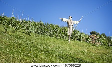 An image of a scarecrow in the summer field