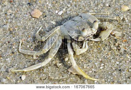 Sea crab on the shore