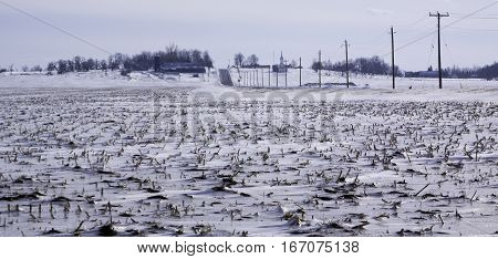 Snow covered field with short corn stocks and a row of utility poles along a road leading toward a small village near rural Rigaud, Quebec, on a slightly overcast but bright day in March.