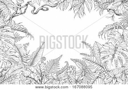 Hand drawn branches and leaves of tropical plants. Monochrome rectangle horizontal floral frame. Monstera ficus fern liana palm fronds sketch. Black and white illustration coloring page for adult.