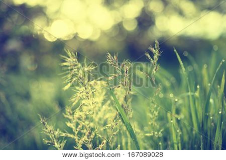 Natural abstract soft green summer eco sunny background with grass and light spots in vintage hipster style
