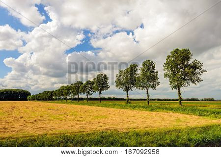 Colorful agricultural landscape in a Dutch polder with drying hay and a row of trees in the background. It is a cloudy day in the summer season.