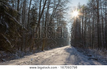 Forest dirt road in snowfall crossing natural stand, Bialowieza Forest, Poland, Europe