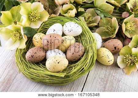 Easter Eggs in green nest with spring flowers closeup