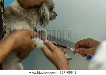 Dog Get Vaccinated Against