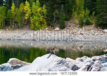 Nature of the Jefferson Lake Recreation Area, Colorado