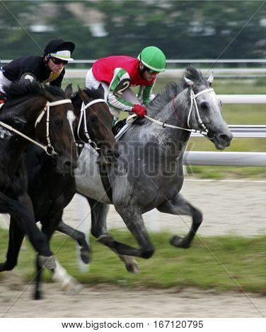 Horse race for the traditional prize Probni in Pyatigorsk,the largest in Russia.