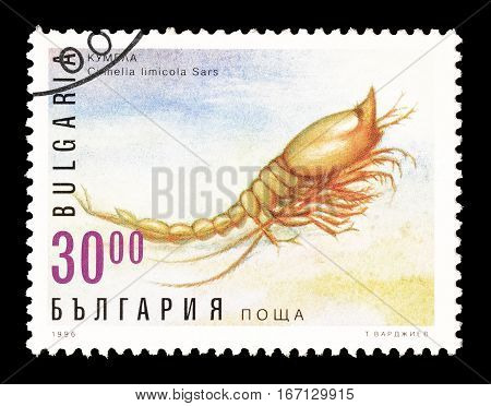 BULGARIA - CIRCA 1996 : Cancelled postage stamp printed by Bulgaria, that shows Cumella.