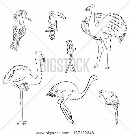 Hand Drawn Exotic Tropical Birds. Doodle Drawings of Parrot Ostrich Emu Hummingbird Hoopoe and Toucan. Sketch Style. Vector Illustration.