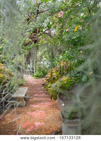 Walkway deep in to the park with spanish moss blurred foreground