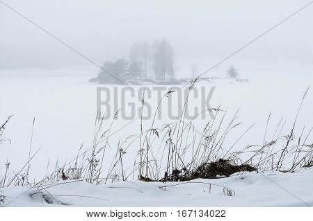 Landscape in winter clean snow. Tender silence of the cold areas. Hazy idyll of infinity and beauty fog.