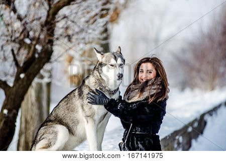 girl with malamute. Young girl playing with a dog in the snow in the winter
