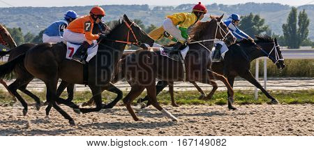 Horse race for the traditional prize Probni in Pyatigorsk, the largest in Russia.