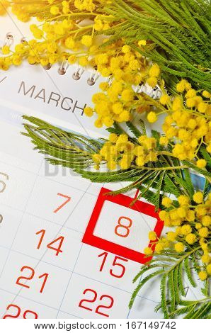 8 March postcard - mimosa flowers over the calendar with framed 8 March date. 8 March festive postcard