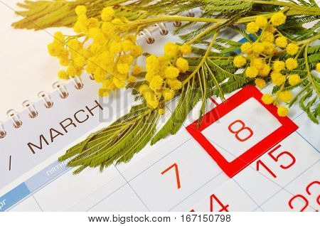 8 March postcard - mimosa flowers on the calendar with framed 8 March date - international women day. 8 March card