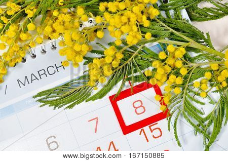 8 March postcard - mimosa flowers branch over the calendar with framed 8 March date. 8 March background with mimosa flowers