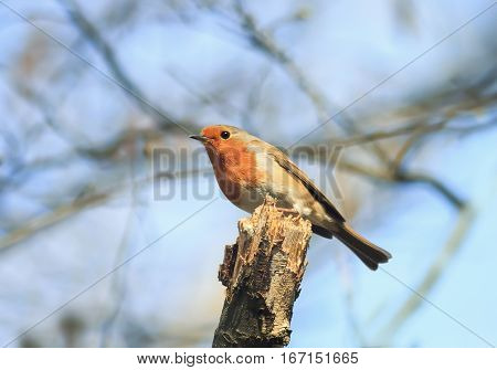 the bird is a Robin sitting on a branch in spring Park